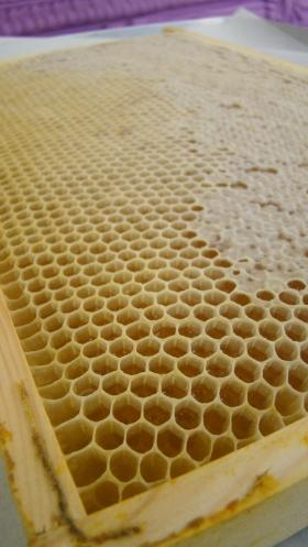 Honey01
